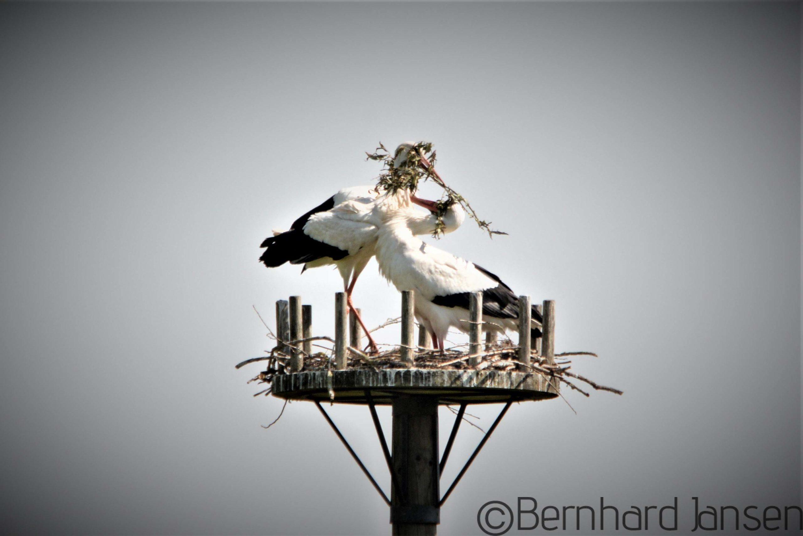 Bernhard Jansen Fotografie Portfolio